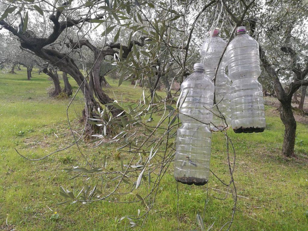 虫取り用のペットボトルの罠
